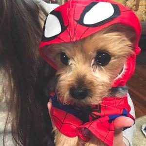 Spider Man Pet Costume!